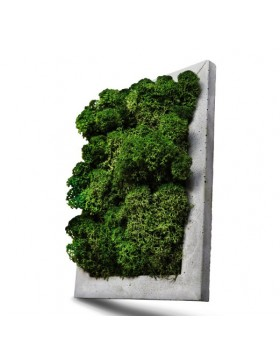 Concrete frame with moss...