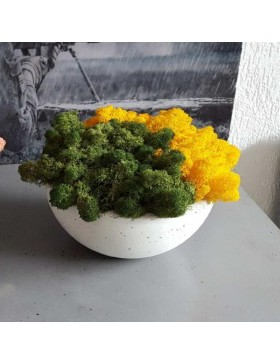 Concrete bowl with moss...