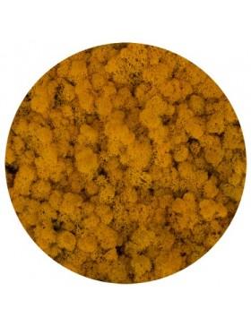 Mech chrobotek yellow 200g