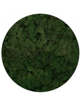 Mech chrobotek moss green 100g