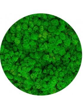 Mech chrobotek grass green...