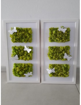 Frame with moss 27x50cm