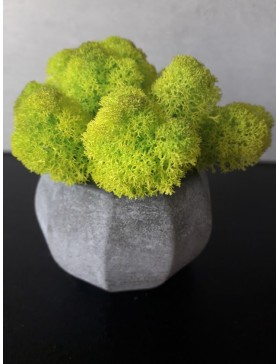 Cup Manila with moss