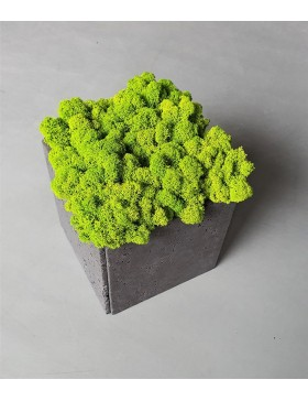 Pot with moss 20x20x20cm