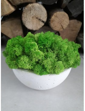 oncrete bowl with moss...