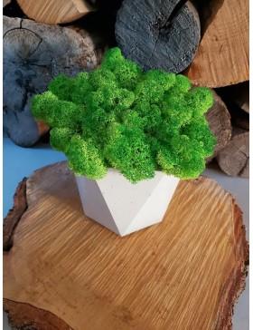 Concrete pot Evona with moss