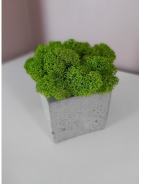 Concrete cup with moss