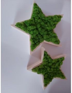 Gwiazdy z chrobotkiem -...