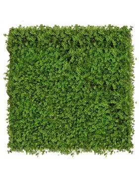 Zielona ściana Koniczyna...