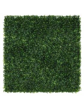 Zielona ściana Bukszpan...