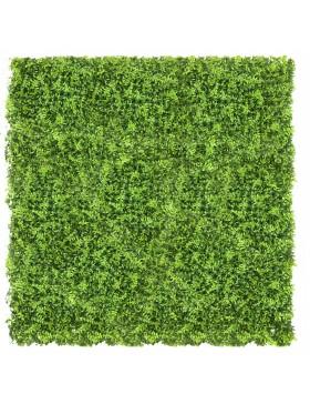 Zielona ściana Soczewica...