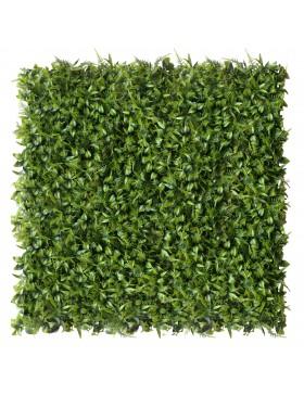 Zielona ściana Peperomia...